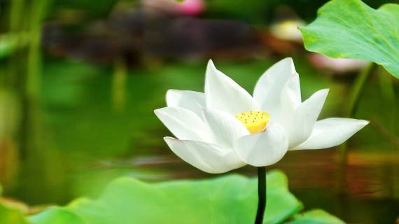 Mindfulness - Mental Health